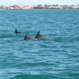 en verder in het Dolphin Discovery Centre in Bunbury – West-Australië